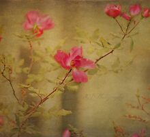 Vintage Rosebush by Scott Mitchell
