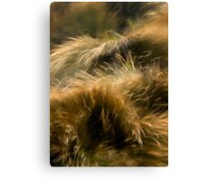 Wind and Grass Canvas Print