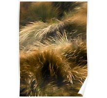 Wind and Grass Poster