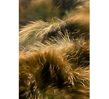 Wind and Grass Photographic Print
