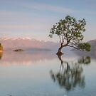Lake Wanaka Tree by Paul Campbell  Photography