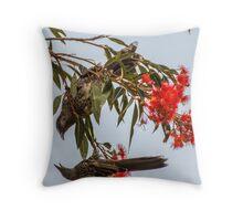 Fighting Wattle Birds Throw Pillow