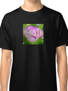 Pink Polygala Myrtifolia in Macro with Green Background  Classic T-Shirt