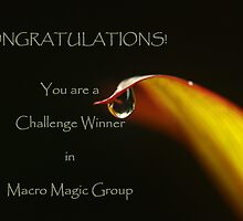 banner for Macro Magic by lensbaby