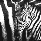 Zebra Foal by Heather Ward