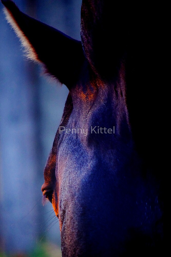 P I S T O L A by Penny Kittel