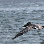 Pelican Flight by CarryOnWayward