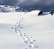 Footsteps in the Snow by Trudi Skinn
