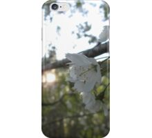 sunset and cherry blossom iPhone Case/Skin