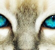 Blue Eye Sticker