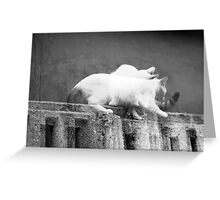chat noir, chat blanche Greeting Card
