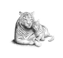 Mother Tiger and Cub Love Photographic Print