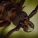 Longhorn beetle by jimmy hoffman