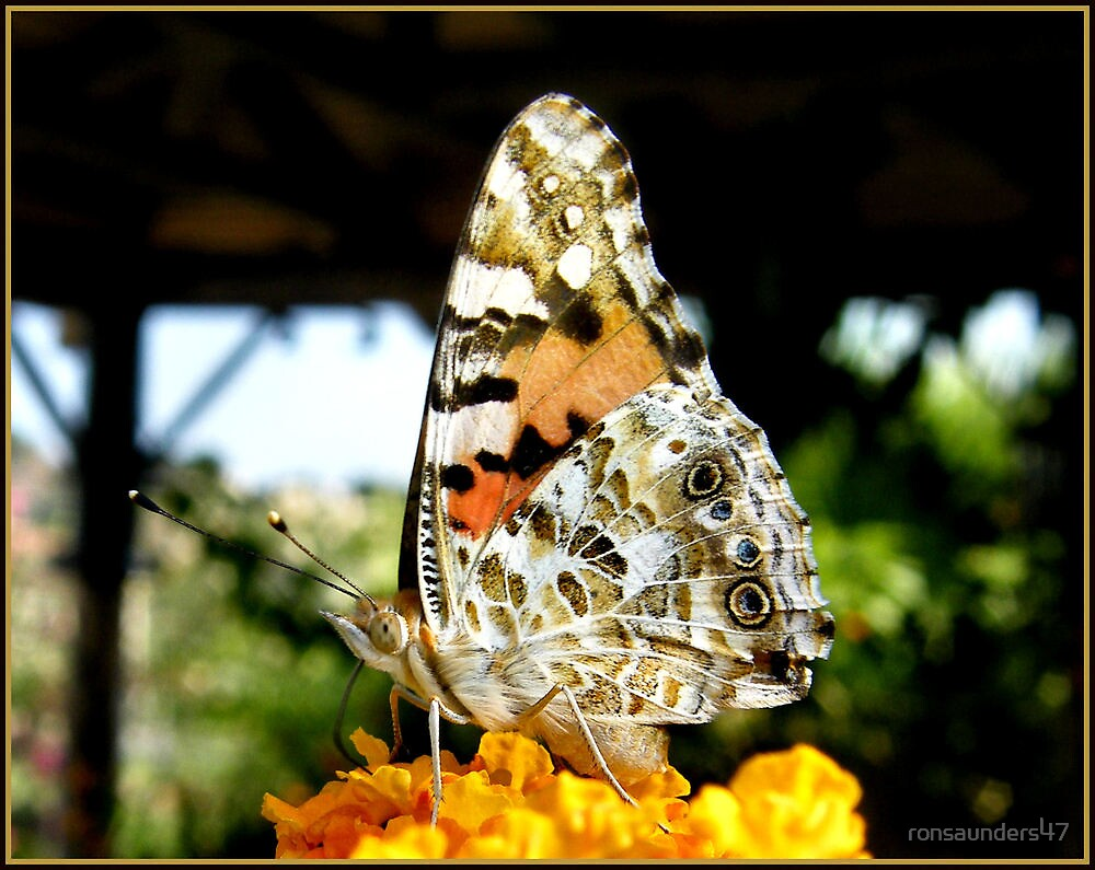 The Tortoiseshell Butterfly up close. by ronsaunders47