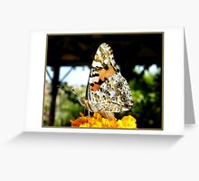 The Tortoiseshell Butterfly up close. Greeting Card