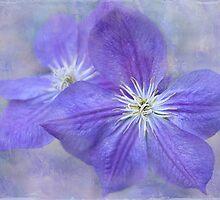 purple prose by Teresa Pople