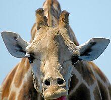 """""""I Don't Care"""" Giraffe Card by Paul Gitto"""
