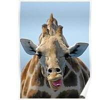 """I Don't Care"" Giraffe Card Poster"
