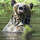 """I Don't Care"" Bear  Card by Paul Gitto"