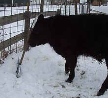 Snow Shovel Challenges by JobieMom