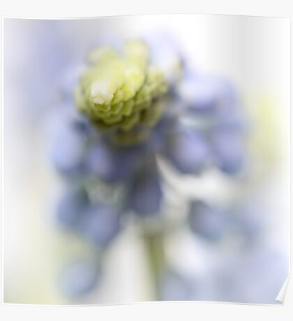 Grape Hyacinth III (abstraction) Poster