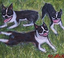Boston Terriers by Ella Meky