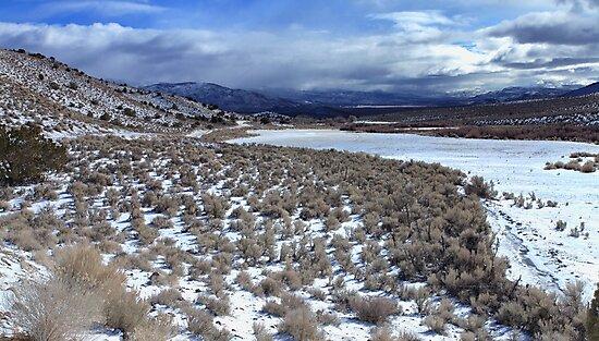 Winter Wind Chill by SB  Sullivan
