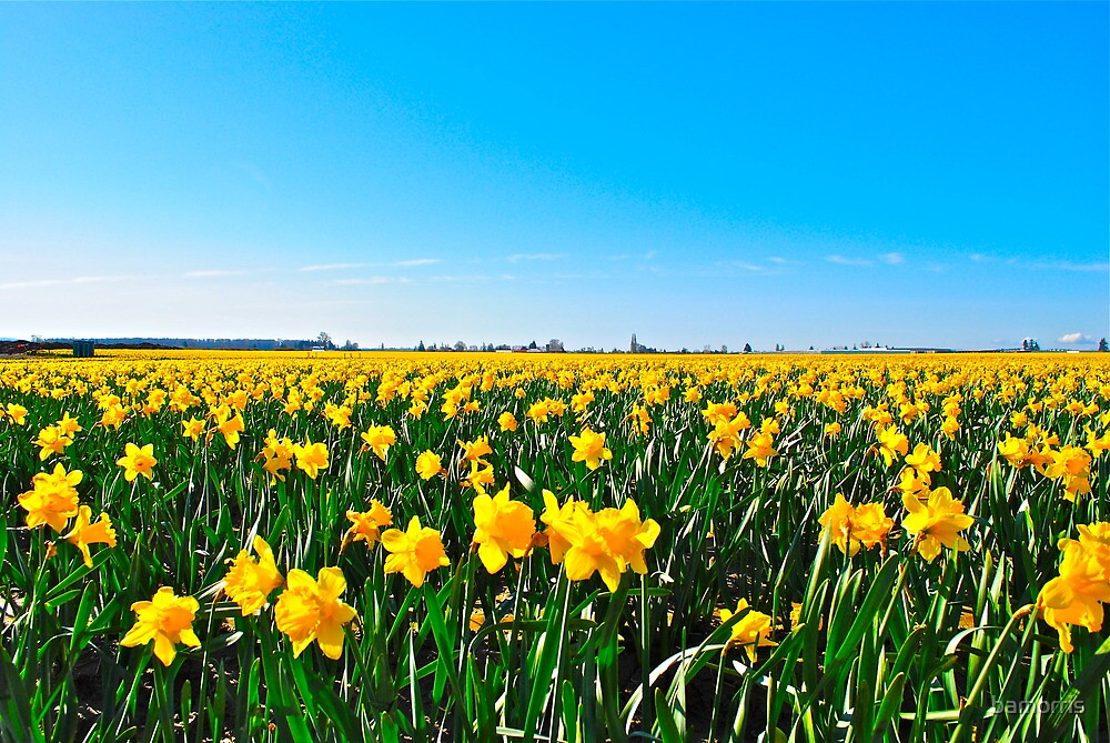 Golden fields by bamorris