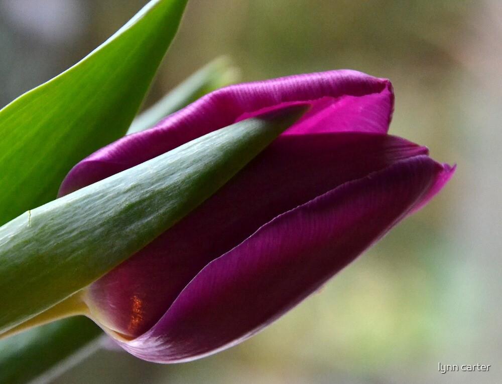 Almost  Purple by lynn carter