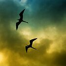 Birds in the clouds, Galapagos by borjoz