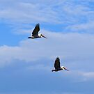 In Flight Together 1 by ©Dawne M. Dunton