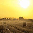 Golden September Morning by mhfore