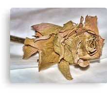 Faded Rose From Days Gone By Canvas Print