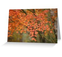 Fall Japanese Maple Greeting Card