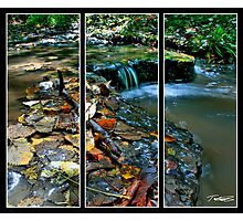 Triptych Photographic Print