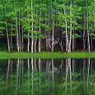 Lakeshore Panorama by David Kocherhans