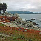 Shoreline Sentries by JPMcKim