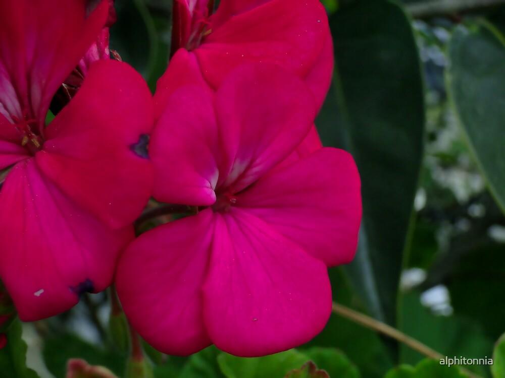 a plants life by alphitonnia