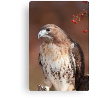 Red -Tailed Hawk ~ Canvas Print