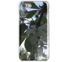 Cherry blossom loads of flowers iPhone Case/Skin