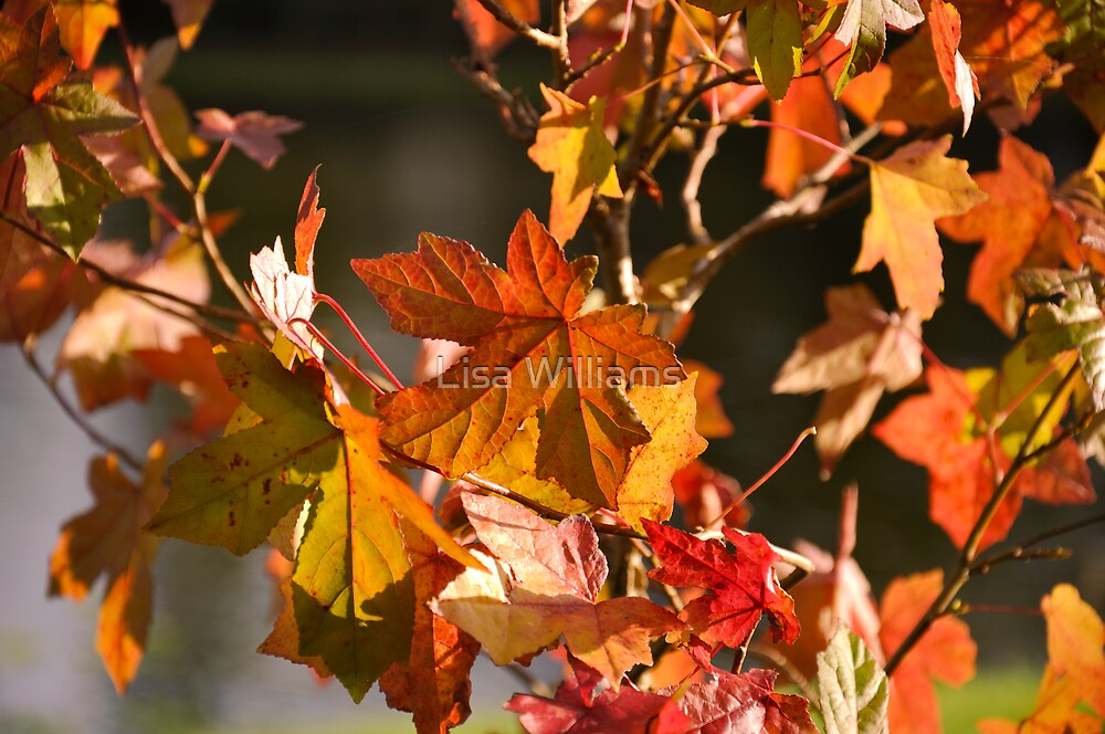 Autumn Colours pt5 by Lisa Williams
