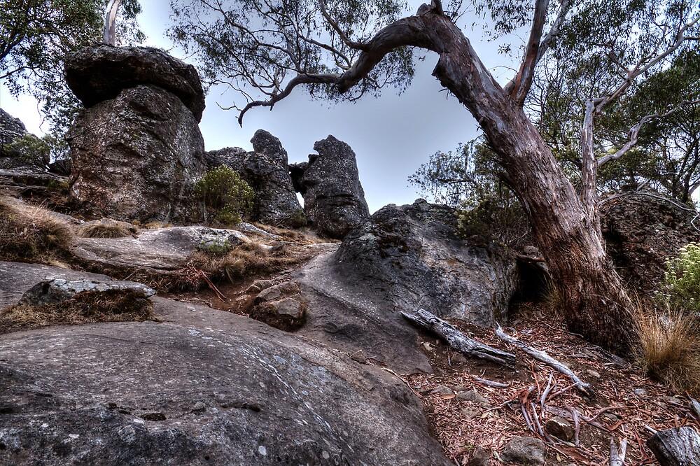 Hanging tree at hanging Rock. by photojunk