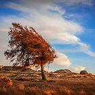 Windblown by John Conway