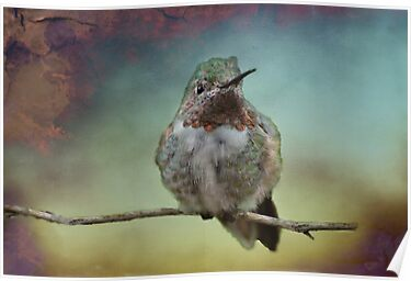 Sweet Hummingbird by Barbara Manis