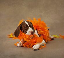 The Bird Dog - Puppy with feathers by Alicia Adamopoulos