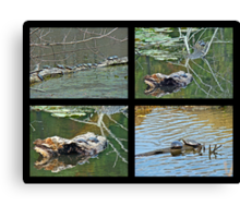 Turtles Rule the Pond Canvas Print