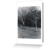 Winter Trees on Campus Greeting Card