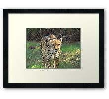 predation Framed Print