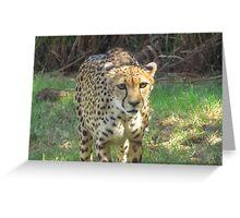 predation Greeting Card