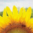 Sunny by Glenna Walker